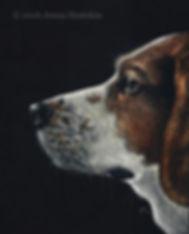 Beagle Pet Portrait Scratchboard