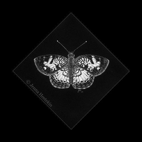 Pearl Crescent Butterfly Scratchboard Fine Art Print