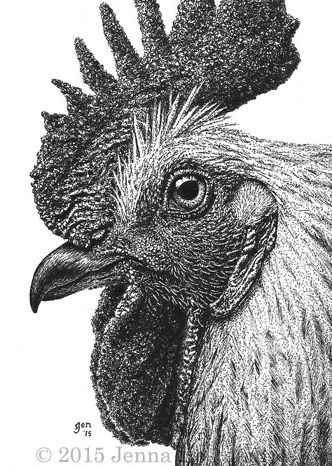 Rooster Fine Art Print and Notecards