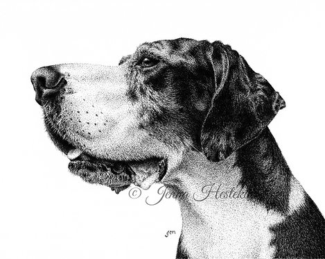 Great Dane Fine Art Print or Notecards