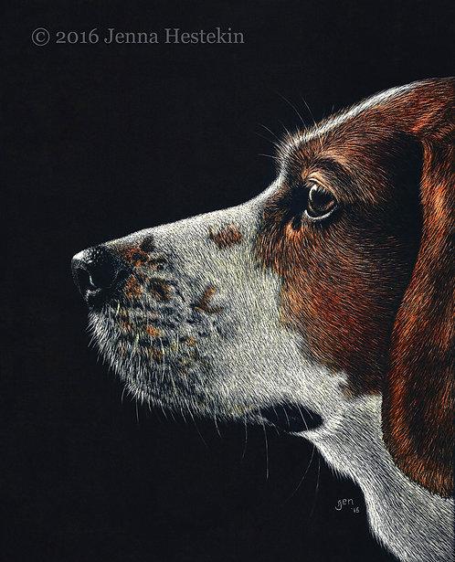 Beagle Scratchboard Fine Art Print