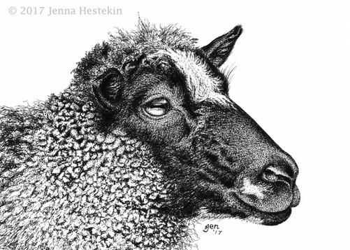 Gotland Sheep ~ Commission