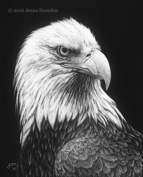 Bald Eagle Scratchboard Fine Art Print
