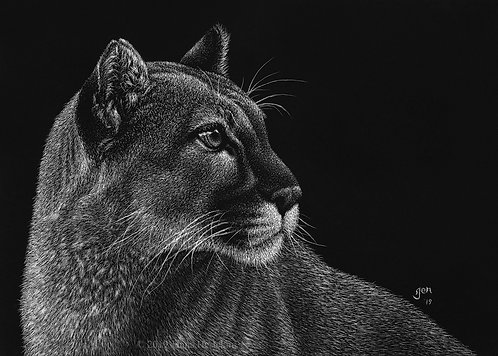 Cougar Scratchboard Fine Art Print