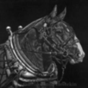 Draft Horse Scratchboard Portrait