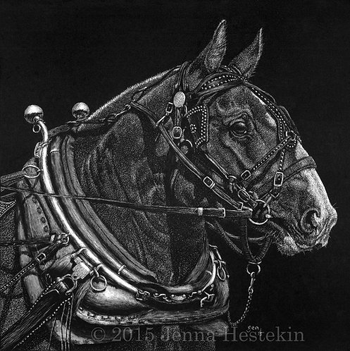 Draft Horse Scratchboard Fine Art Print