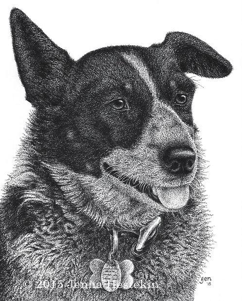 Australian Shepherd Fine Art Print or Notecards