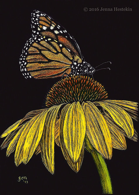Monarch Butterfly Scratchboard Fine Art Print