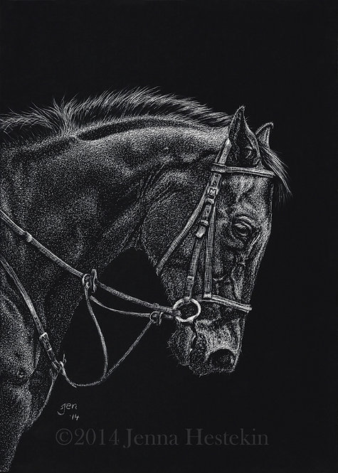 Thoroughbred Scratchboard Fine Art Print