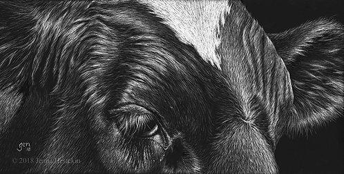 Holstein Scratchboard Fine Art Print