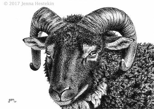 Shetland Sheep Fine Art Print or Notecards