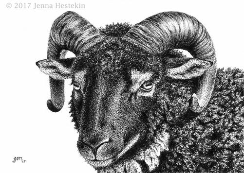 Shetland Sheep ~ Commission