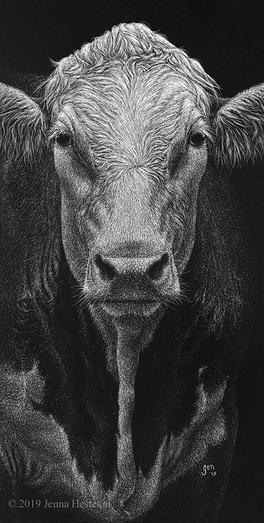 Hereford Scratchboard Fine Art Print
