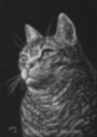 Tabby Cat Pet Portrait, Scratchboard
