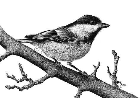Chickadee Fine Art Print or Notecards