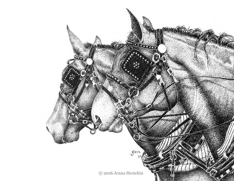 Draft Horses Fine Art Print or Notecards
