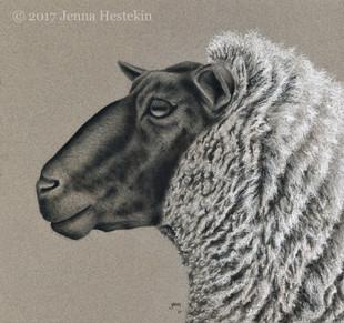 Sheep Portrait ~ Commission