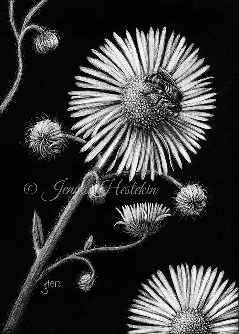 Bee On Flower Scratchboard Fine Art Print