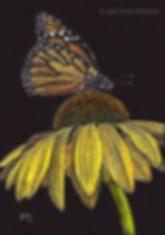 Butterfly Flower Scratchboard
