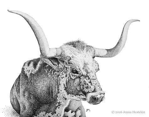 Texas Longhorn Fine Art Print or Notecards