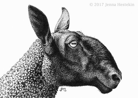 Bluefaced Leicester Sheep Fine Art Print or Notecards