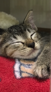 This is Baby Blue, who was rescued from a parking lot in the spring of 2019. We needed to monitor her closely for a few weeks to see her returning to normal healthy perimeters