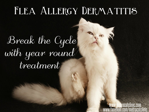 Research Shows a 67% Increase in Flea Dermatitis in Cats