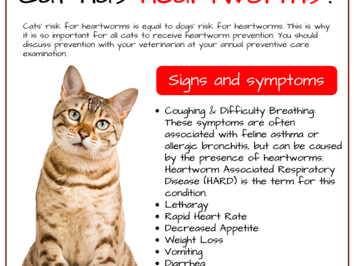 March is Heartworm Awareness Month!