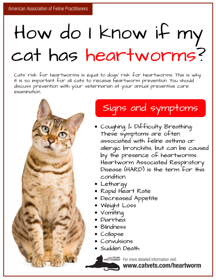 A handout from the American Association of Feline Practitioners on Heartworms