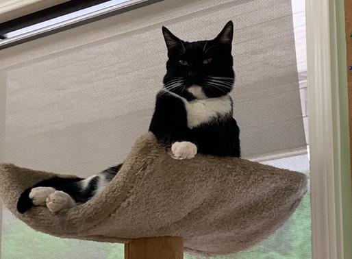 Cat Scratching Behavior