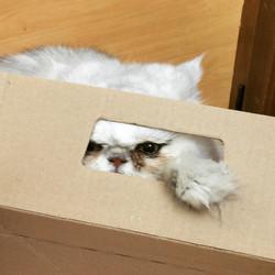 Nigel Box
