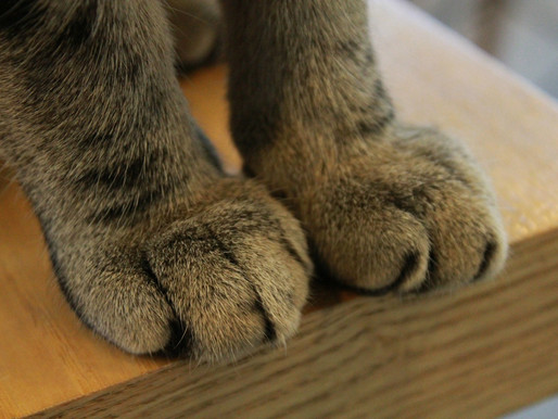 Pain & Adverse Behavior in Declawed Cats