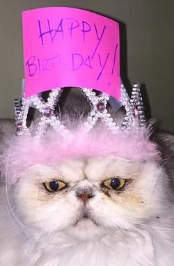 Nigel Birthday