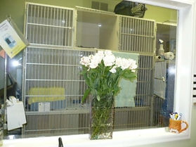 We have large and small boarding cages, condos, runs, and rooms.