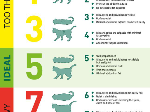 Pet Obesity Awareness Day