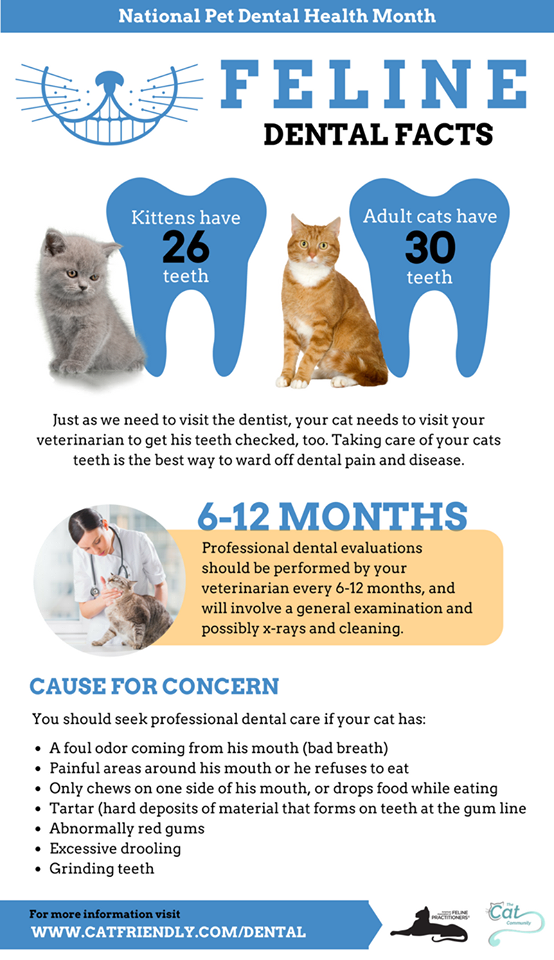 Most cats over the age of three suffer from dental problems.  Regular check-ups ensure your feline friend maintains a healthy mouth.