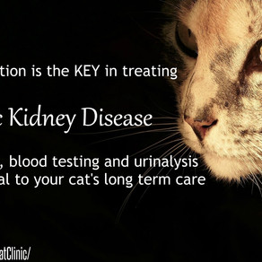 Chronic Kidney Disease: The Importance of Yearly Screening
