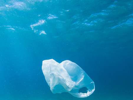 Ditch the Plastic Bags!
