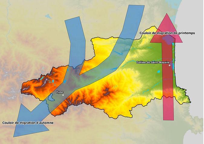 Carte migration [Site GOR].jpeg