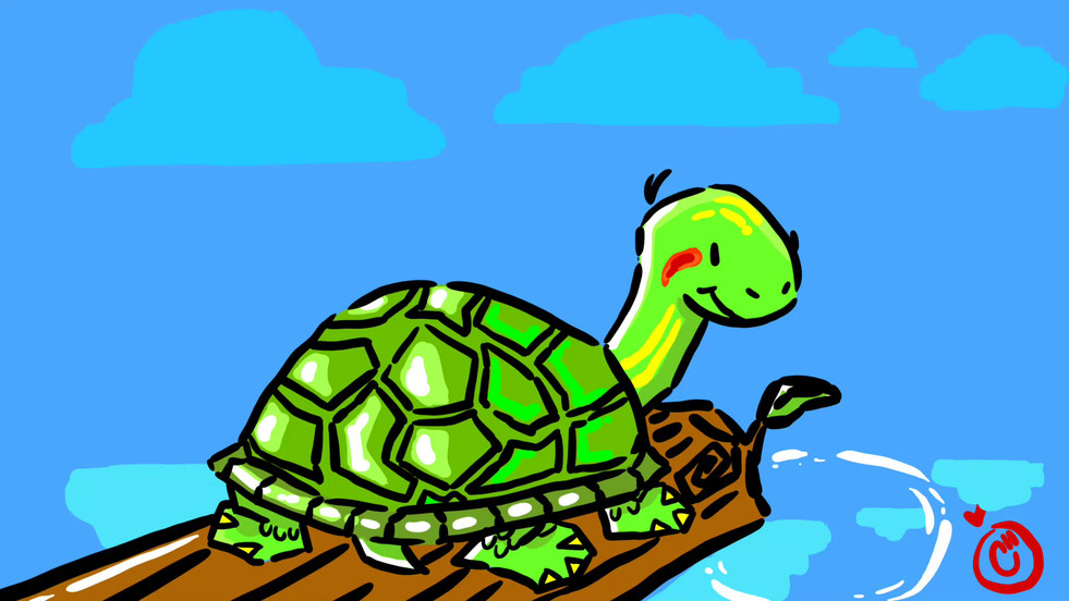 Turtle Time!!