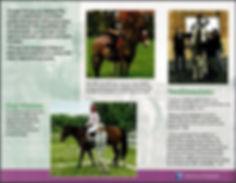 ttr p2 brochure.JPG