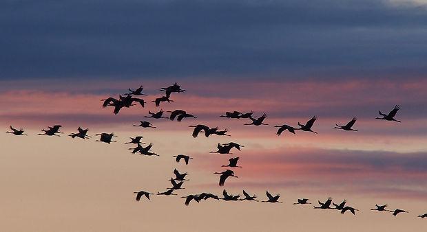 cranes-1622538_1920.jpg