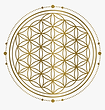 21-210024_sacred-geometry-png-flower-of-