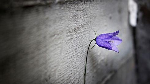 1040609-purple-flower-white-background-1