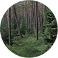 Wald Button 2.png