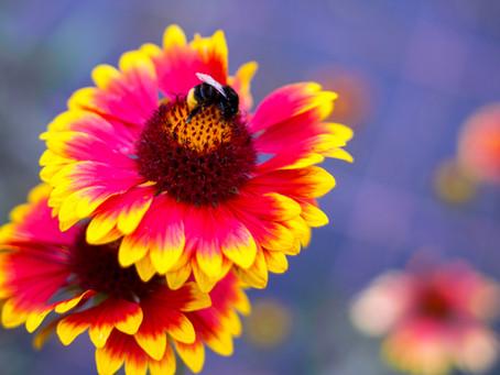 NiLi`s Fototipps 1 - Blumen fotografieren
