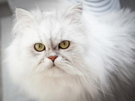 NiLi`s Fototipps 4 - Katzen fotografieren