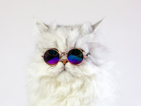GIZMO the coolest cat