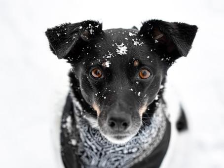 Tiere im Schnee fotografieren