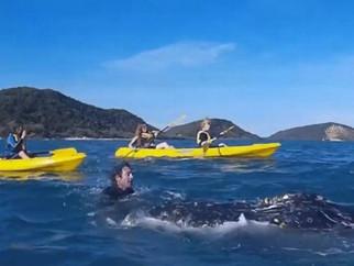 Baleia se aproxima de canoístas e 'pede ajuda'.